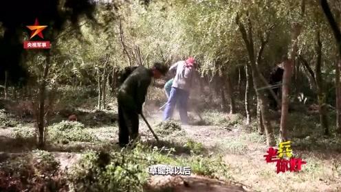 150万株树背后的幕后英雄 竟是一个83岁的老兵