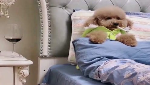狗狗和弟弟分开了,看狗狗伤心的样子让人心疼,网友:成精了!