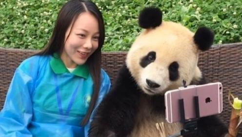 老外求合影,熊猫一脸嫌弃,结果来了一位美女,画风瞬间转变