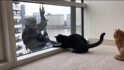2只猫咪坐在窗前看风景,突然窗外出现一个人影,镜头记录全过程