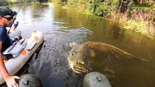全程紧张刺激!野外河中搏巨型鲶鱼,累坏了钓鱼人!