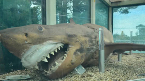 小伙闯入废弃动物园,进入地下室后,竟发现长达4米的大白鲨