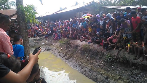 水沟晚上老是发出声响,村民将水抽干后,竟发现一条巨无霸!