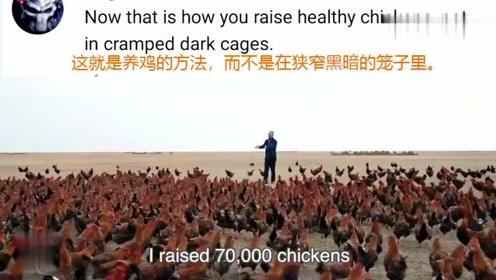 这70000只中国鸡在国外火了,养鸡模式引发国外网友集体吐槽