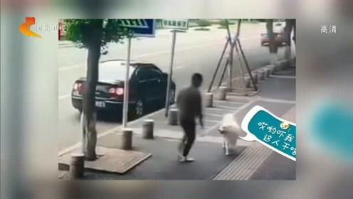 男子用铁丝划手碰瓷狗,划破后直呼被咬,狗被吓的直后退