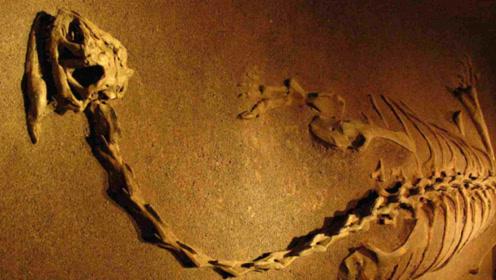 科幻片中的怪兽在现实中也有?海龙王遗骸被找到,已有7千年历史