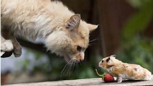 猫和老鼠有什么过节,为什么一见老鼠就非抓不可?到底什么仇什么怨