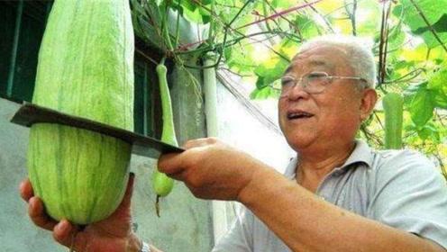 老人种出神奇的瓜,砍了一半还会继续长,看完真是大开眼界