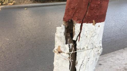 """法桐树拦腰折断裂开1.2米高""""伤口""""!环卫工:去年被风刮的"""