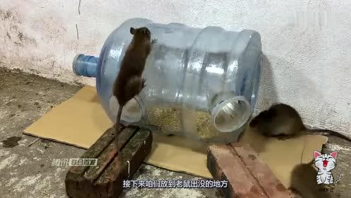 小伙花5元买个饮水机水桶,制成捕鼠神器,老鼠排队往里钻!