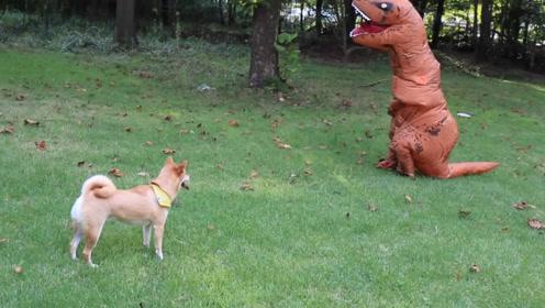 这个铲屎官真调皮!穿恐龙服恶搞狗狗,吓得狗狗不敢接近