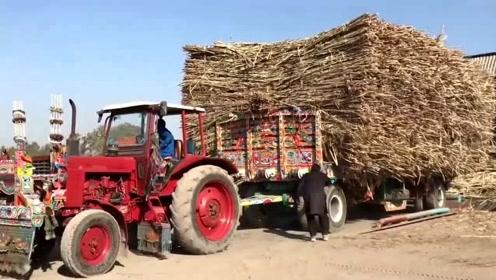 印度农民这一大车甘蔗是如何卸货的?这回看明白了