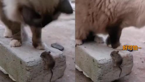老鼠遇见猫:咱也不敢跑 咱也不敢说 咱只敢抖一抖……