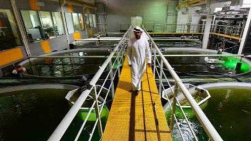 """迪拜沙漠""""长出""""三文鱼?黑科技渔场每月产15吨鲜鱼,迪拜人:神话变现实"""
