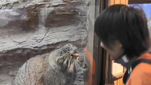 长得像猫咪一样的动物,竟然还会跟游客打招呼,真是没谁了