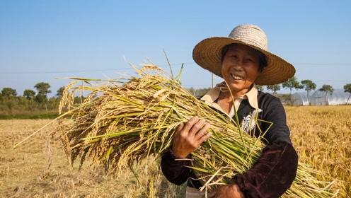 旭耕生态米 与自然共生