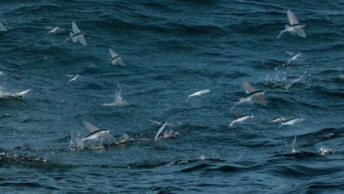 """你们没看错,的确是一群鱼在天上""""飞""""!"""