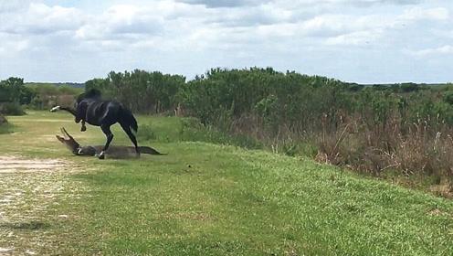 鳄鱼在草丛中晒太阳,下一秒脑袋被踹好几脚,鳄鱼:我是谁我在哪?