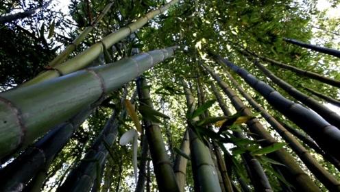 小伙拿竹子做成的排气管安在摩托上,启动的瞬间,就知道没这么简单