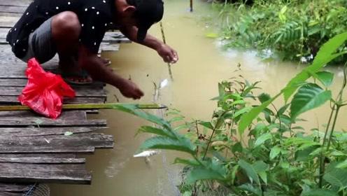 小哥哥好有才啊,小桥下随便扯点渔网,粘的都是鱼