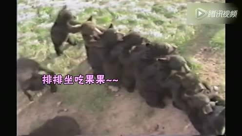可爱小熊遵守秩序 抱肩排队等吃果果