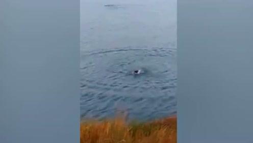 熊孩子将小狗扔入水中 狗被鳄鱼一口吞掉
