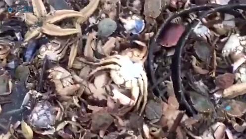 风暴后数以百万计海鲜被冲上岸 目击者:场面如同世界末日