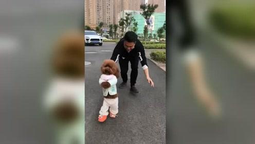 铲屎官和泰迪狗狗模仿秀,真是可爱的一对