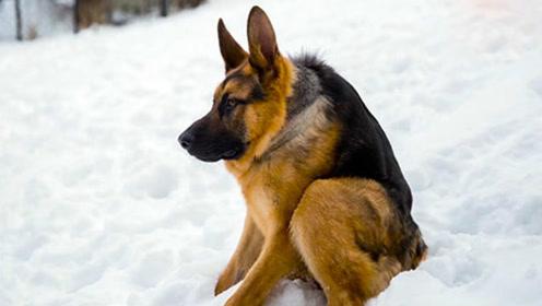 狗狗得了罕见病没有脖子  依然乐观坚强