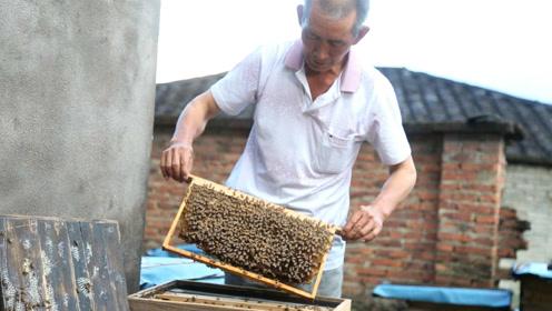泪奔,农村最后的养蜂人,40箱蜜蜂年产300斤蜂蜜,无奈卖不出去