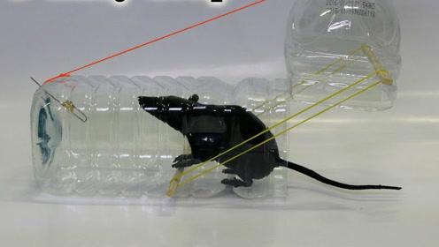 塑料瓶化身捕鼠利器,赶紧来看看怎样做吧