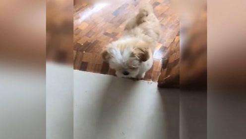 人活着不如狗系列,主人在家给爱玩的狗子建造一个专属滑滑梯