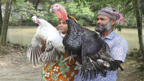 两只大火鸡,印度大妈做成美味的咖喱,一家族人吃的有滋有味