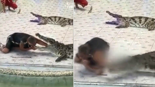 惊险!驯养员表演惨遭鳄鱼咬手臂狂甩