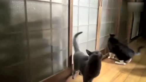 萌猫:快起快起,我饿啦,I am hungry