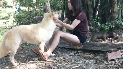 狗狗和主人在野外玩耍,很有爱!