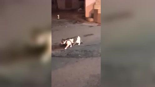 两只猫咪要打架,结果金毛狗狗出来劝架