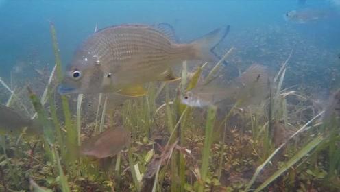 最可怜的鱼儿,生活在有腐蚀性的沸水里,不是饿死就是被煮熟