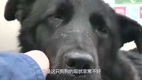 可怜的狗狗被人用水泥固定在洞中,眼神绝望让人不忍直视!