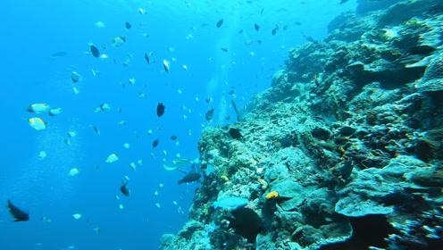 美娜多太远,帕劳太难,国内潜水必选三亚