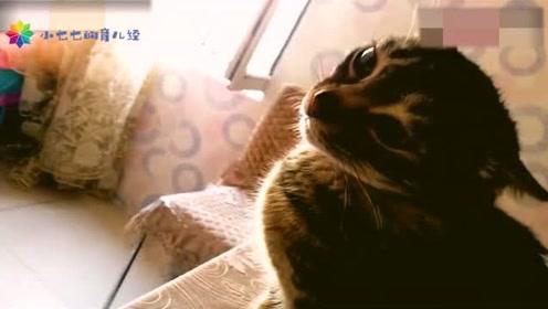以前小瞧猫咪了!给它头上套个皮筋,分分钟给你挠下来