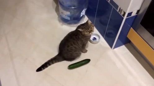 猫咪看见黄瓜会被吓飞 铲屎官们真是太坏了
