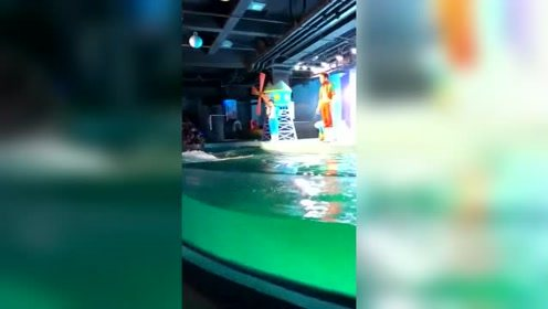 海豹失控不开心了,还攻击了观众
