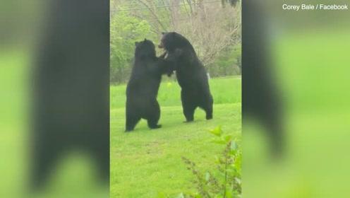 """家门前惊现两熊""""相扑"""" 男子躲进屋内"""