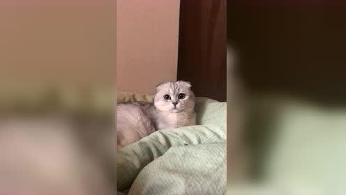喵星人:说什么呢,我这是可爱!