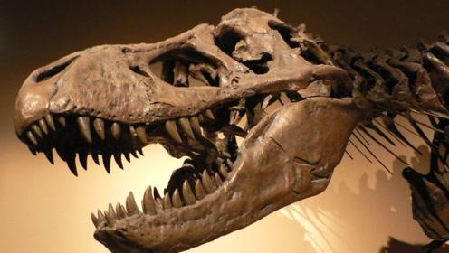 最大霸王龙骸骨现身!科学家争论不已,恐龙生前遭遇被预测