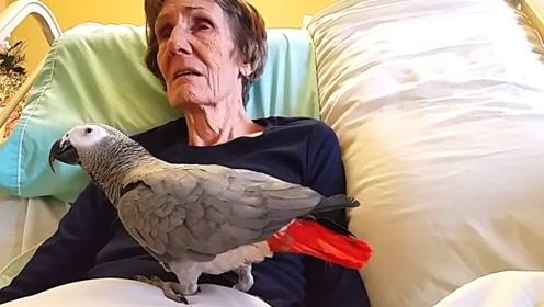 鹦鹉病妇生活25年,今面临诀别,鹦鹉的反应让人潸然泪下