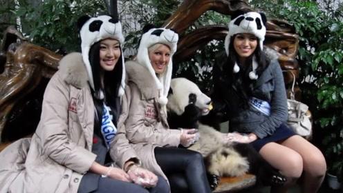 德国人有多爱大熊猫,动物园一年花七八百万,为了养两只吃货
