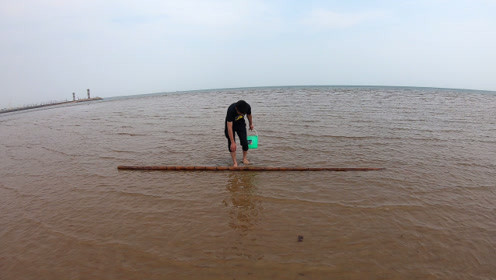 """小伙赶海偶遇海浪冲上来的4米""""大货""""!喜滋滋的扛回家留着备用"""