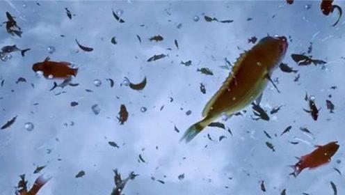 天上掉馅饼不存在,但天上会掉鱼呀,成千上万条鱼从天而降!